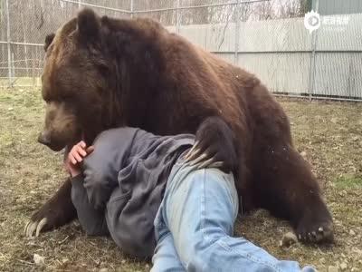 实拍男子与巨熊关系亲密 趟地上依偎睡觉