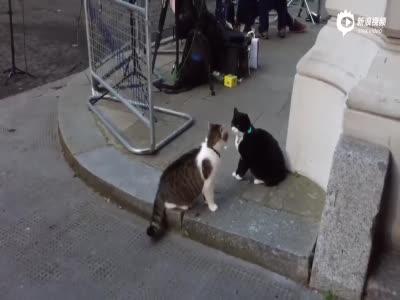 英外交部捕鼠官被首相猫呵斥 畏惧蜷缩一团