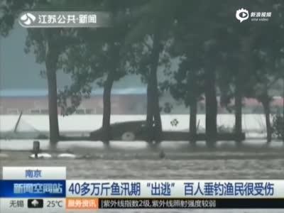 40万斤鱼汛期出逃 百人无视警示牌河边垂钓