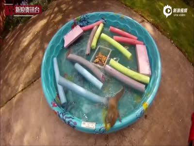 吃货小松鼠拼命涉水取花生 失足落水令人捧腹