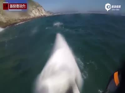 实拍南非海豹妈妈为护幼崽 猛烈攻击皮艇