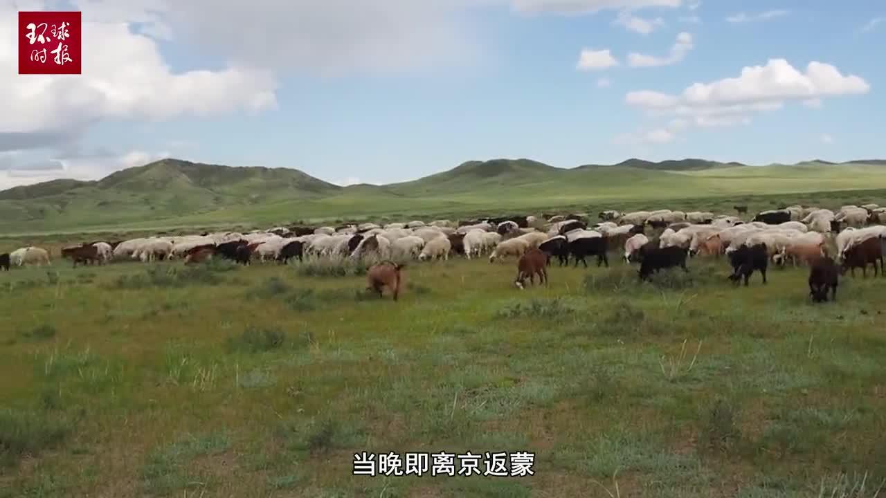 """视频-蒙古国总统赠送中国的3万只羊正在""""集结"""""""