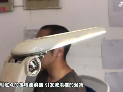 上海一小区投喂流浪猫引发业主矛盾 专家建议合理化投喂