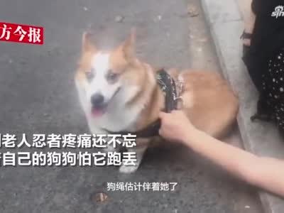 七旬老太太遛狗被狗绳绊倒骨折 被救助时强忍疼痛牵狗怕跑丢