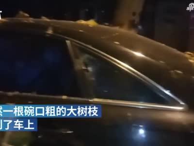 郑州一辆奥迪A6刚停好 一根大树枝直接砸下