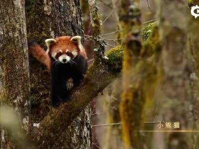 云南保山生物多样性长卷