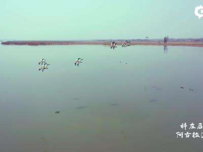 春日湿地鸟翩跹