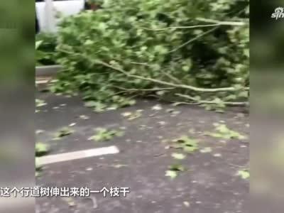 郑州一老树被货车挂断,树干横在路中造成拥堵,路人:不是第一次了