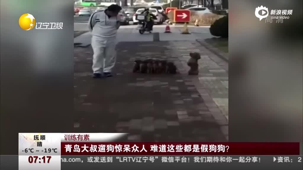 可爱!大叔遛狗惊呆众人 难道这些都是假狗狗?