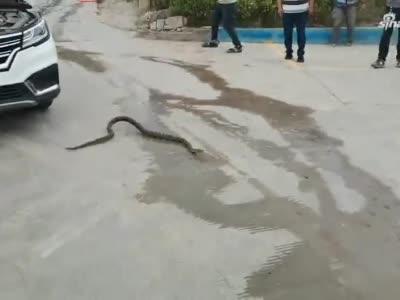 一米长花蛇钻进汽车发动机舱 郑州消防员到场处置