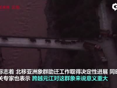 最新!北移亚洲象安全渡过元江